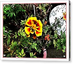 Acrylic Print featuring the photograph Orange And Yellow Flower by Joan  Minchak