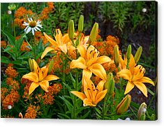 Acrylic Print featuring the photograph Orange Asiatic Lilies And Butterfly Weed by Kathryn Meyer