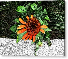 Acrylic Print featuring the photograph Orange At Highline Nyc by Joan  Minchak