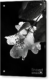 Orange Blossom Acrylic Print
