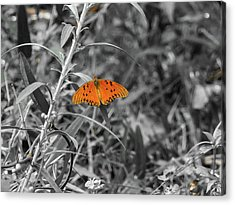 Orange Butterfly In Black And White Background Acrylic Print