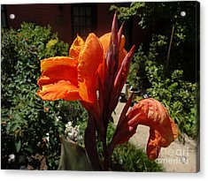 Acrylic Print featuring the photograph Orange Canna Lily by Rod Ismay