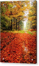Acrylic Print featuring the photograph Orange Carpet by Dmytro Korol