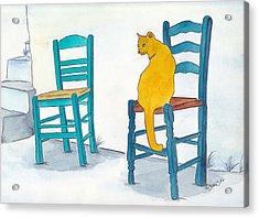 Orange Cat Acrylic Print by Michaela Bautz