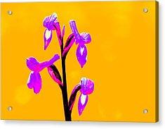 Orange Champagne Orchid Acrylic Print