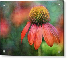 Orange Coneflower 2576 Idp_2 Acrylic Print