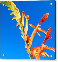 Orange Contrast Acrylic Print by Jean Booth