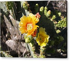 Orange Cup Acrylic Print by James Granberry