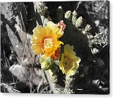 Orange Cup Light Acrylic Print by James Granberry