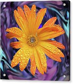 Orange Daisy Swirl Acrylic Print