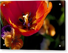 Orange Delight Acrylic Print by Don  Wright