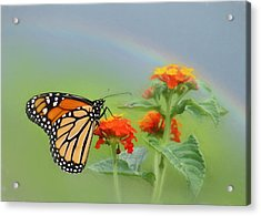 Orange Delight Acrylic Print by Lori Deiter