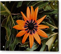 Orange Demeanor  Abstract Acrylic Print by Debbie May
