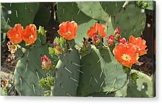 Orange Dream Cactus Acrylic Print