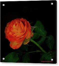Orange Flower Acrylic Print by Chaza Abou El Khair