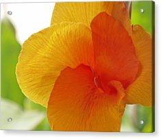 Orange Flower Acrylic Print by James Granberry