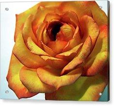 Orange Flower Acrylic Print by Maggy Marsh