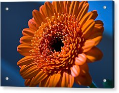 Orange Flower Acrylic Print by Svetlana Sewell