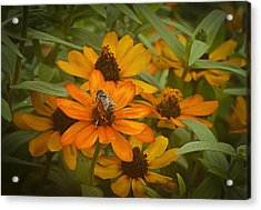 Orange Flowers And Bee Acrylic Print