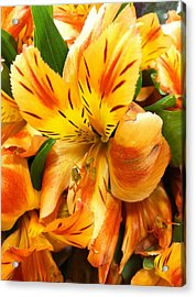 Orange Flowers Acrylic Print by Carlos Avila