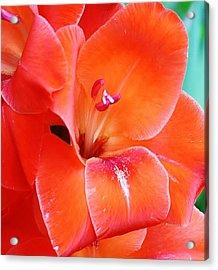 Orange Gladiola Acrylic Print
