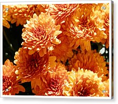 Orange Glory Acrylic Print