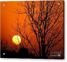 Orange Glow Acrylic Print by Lynn Reid