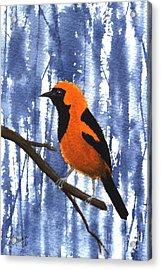 Orange-headed Oriole Acrylic Print
