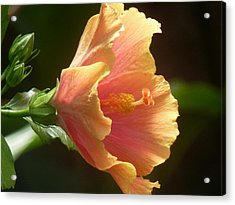 Orange Hibiscus Acrylic Print by Beth Akerman
