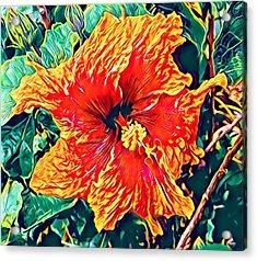 Orange Hibiscus In Crepe - Full View Acrylic Print