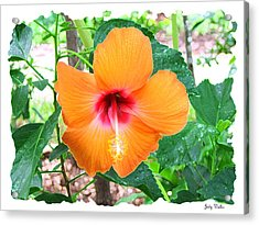 Orange Hibiscus Acrylic Print by Judy  Waller