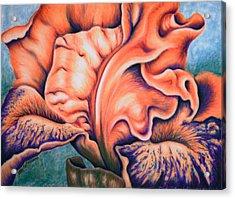 Orange Iris Acrylic Print
