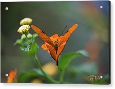 Orange Is The New Butterfly Acrylic Print