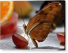 Orange Julia Butterfly Acrylic Print