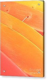 Orange Kayaks Acrylic Print by Brandon Tabiolo - Printscapes