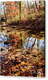 Acrylic Print featuring the photograph Orange Leaves by Iris Greenwell