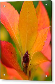 Orange Leaves Acrylic Print by Juergen Roth