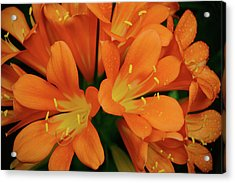 Orange Lilies No. 1-1 Acrylic Print
