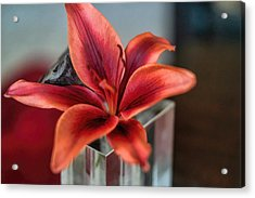 Acrylic Print featuring the photograph Orange Lilly And Her Companion Abstract by Diana Mary Sharpton