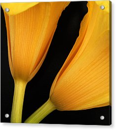 Orange Lily Abstract Acrylic Print by Tony Ramos