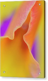 Orange Orchid Acrylic Print