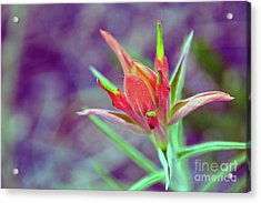 Orange Paintbrush Flower Acrylic Print