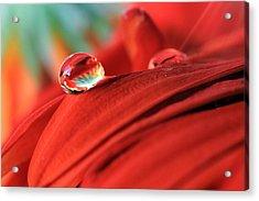 Orange Petals And Water Drops Acrylic Print