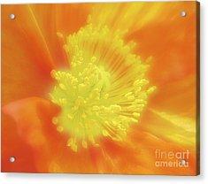 Orange Poppy Acrylic Print by Addie Hocynec