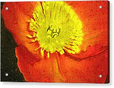 Acrylic Print featuring the photograph Orange Poppy by Donna Bentley
