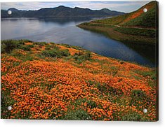 Acrylic Print featuring the photograph Orange Poppy Fields At Diamond Lake In California by Jetson Nguyen