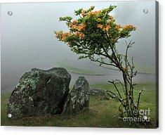 Orange Rhododendron In The Blue Ridge Acrylic Print by Dan Carmichael