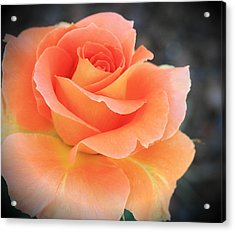 Acrylic Print featuring the photograph Orange Sherbert by Marna Edwards Flavell