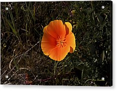 Orange Signed Acrylic Print