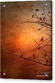 Orange Simplicity Acrylic Print by Tara Turner